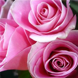 http://www.linternaute.com/acheter/commerce-equitable/diaporama/images/roses.jpg