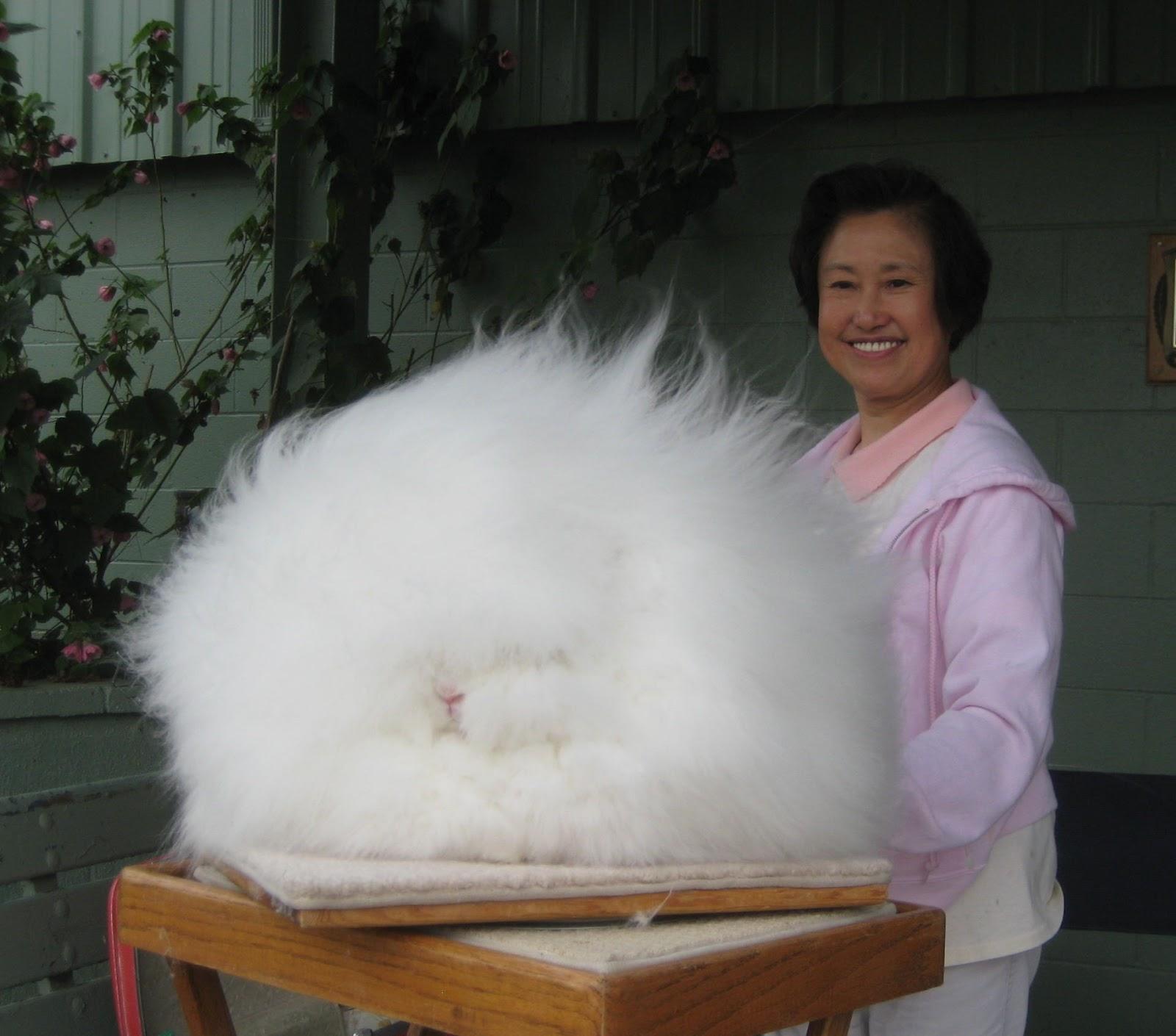 Le temple des lapins Lapin-le-plus-poilu-1