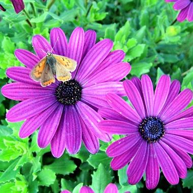 http://www.linternaute.com/humour/betisier/enquete/dix-fa%E7ons-d-avoir-raison/image/papillon.jpg