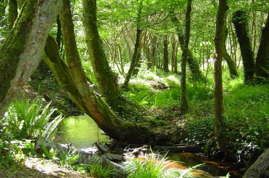 http://www.linternaute.com/humour/diaporama/06/druides/image/02.jpg