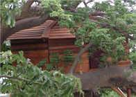 Image Baobab-cabane
