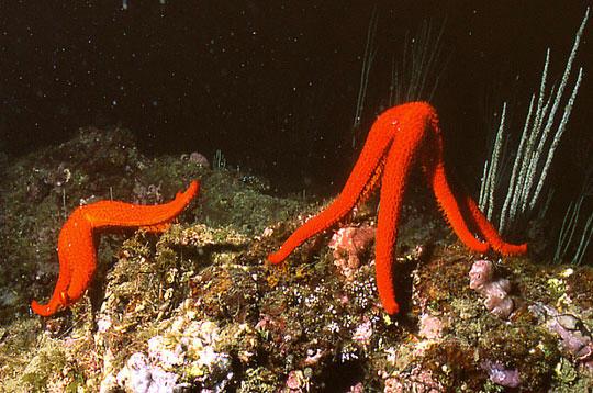 les fonds marins surprenants des aresquiers  pr u00e8s de