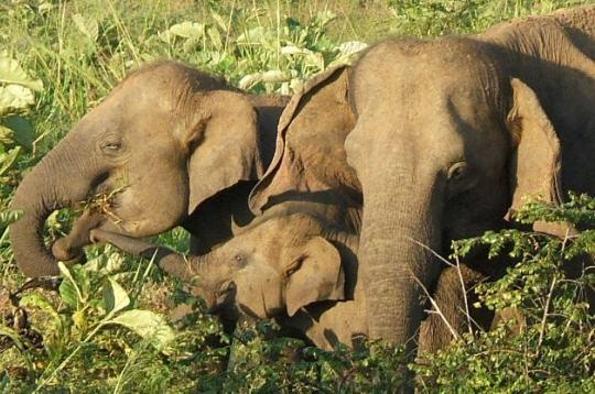 el u00e9phants   14 photos des animaux et de leurs petits
