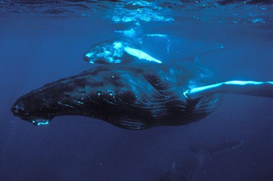 Baby baleines boom