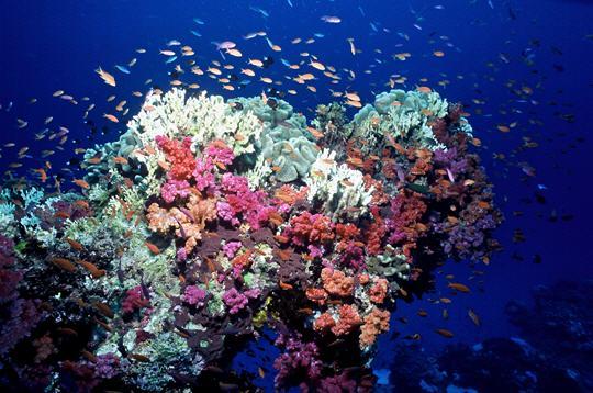 Trois mille flotteurs en mer mesurent le climat