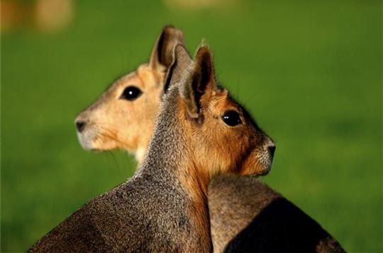 visite en images de l u0026 39 ecole nicolas hulot pour la nature