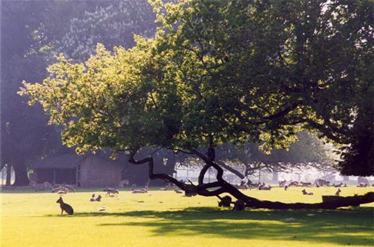 le parc visite en images de l 39 ecole nicolas hulot pour la nature et l 39 homme parc de branf r. Black Bedroom Furniture Sets. Home Design Ideas
