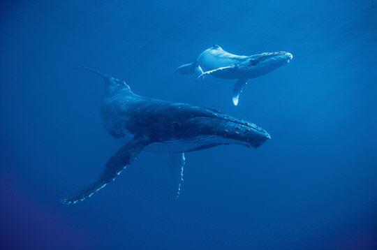baleines  carnets de photographes  des b u00eates et des hommes