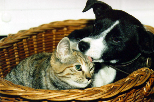 chien et chat par les lecteurs entre chien et chat par ren mussati. Black Bedroom Furniture Sets. Home Design Ideas