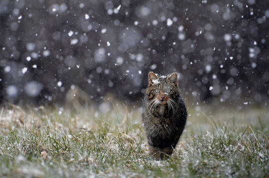 Résultats de recherche d'images pour «chat dans la nature»