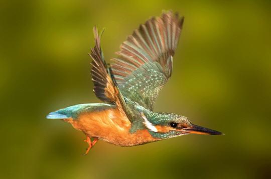 martin p u00eacheur   14 photos d u0026 39 oiseaux de france par david me u00efer