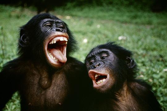 http://www.linternaute.com/nature-animaux/animaux/diaporama/photographe-animalier/emmanuelle-grundmann-cyril-ruoso/image/2.jpg