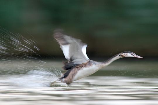 Envol d'un oiseau