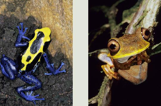 http://www.linternaute.com/nature-animaux/animaux/diaporama/photographe-animalier/nicolas-cegalerba/image/5.JPG