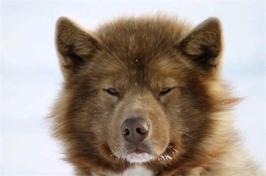 les plus beaux chiens de l u0026 39 internaute