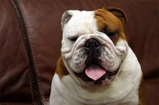 les plus beaux chiens de l u0026 39 internaute magazine