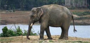 ORIGINAL Elephant Painting  YouTube