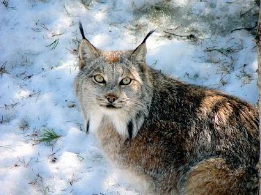 http://www.linternaute.com/nature-animaux/nature/diaporama/agenda/decembre/images/9.jpg