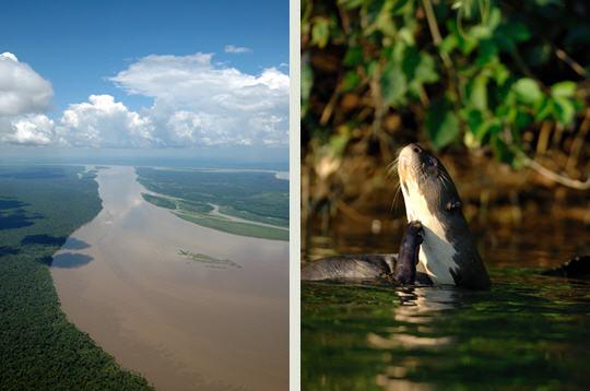 غابات الأمازون 11