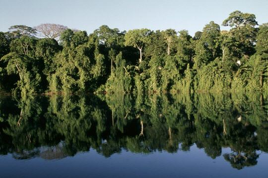 La déforestation annule presque le bilan carbone des forêts tropicales