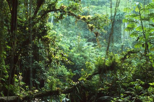 parc national de serra da bocaina  br u00e9sil   10 photos de