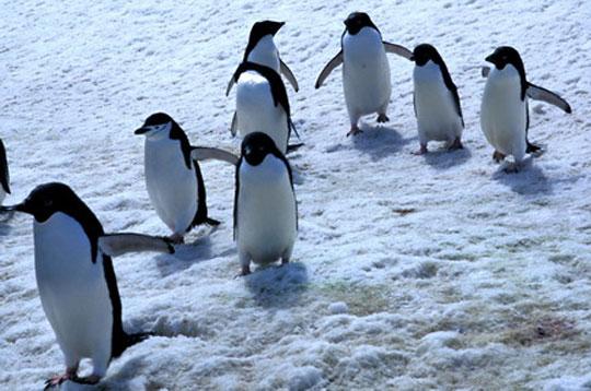 Voyage dans le grand froid etienne pierart - Animaux pole nord ...