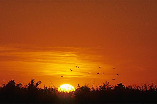 envol d u0026 39 oiseaux  delta de l u0026 39 okavango  botswana   10 photos