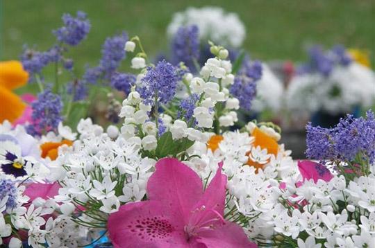 Nature vos plus beaux brins de muguet bouquet de mai - Photos de bouquet de muguet ...