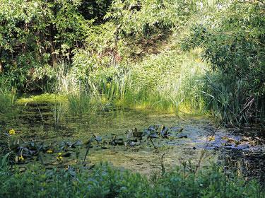 Paris au calme 15 havres de paix jardin naturel for Le jardin naturel