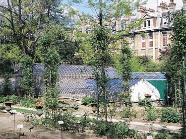 Paris au calme 15 havres de paix jardin botanique de for Jardin botanique paris