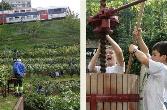 Les plus belles vignes d 39 ile de france le domaine viticole d 39 issy l - Plu issy les moulineaux ...