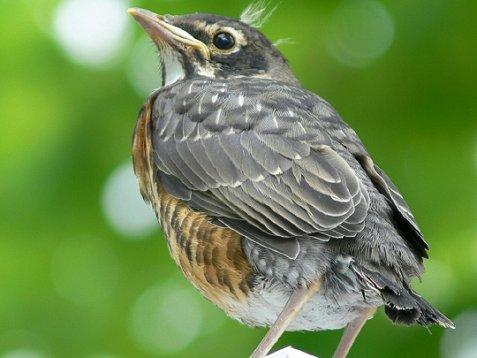 15-oiseau.jpg
