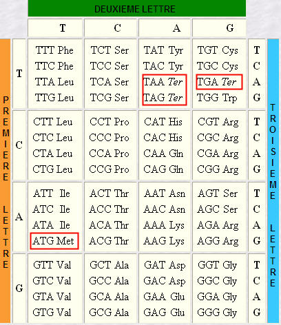 Adn 3 Lettres Devenues Stars Code Genetique