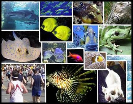 Les poissons : nos cousins, nos ancêtres