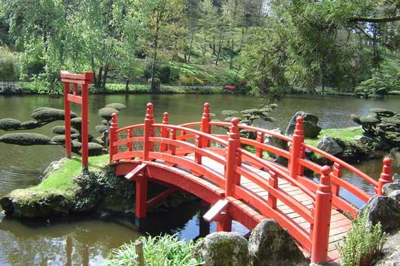 jardins japonais de france forum aquajardin bassin ko mare tang. Black Bedroom Furniture Sets. Home Design Ideas