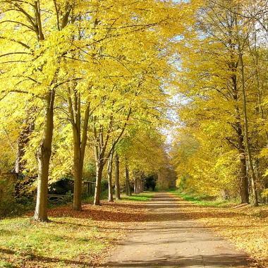 Promenons nous dans les bois la for t de saint germain en laye - Foret saint germain en laye plan ...