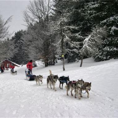 10 activit s sensations en hiver balade en chiens de for Balade chien de traineau doubs