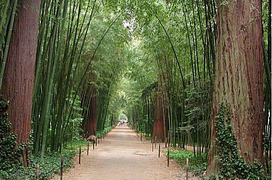 La bambouseraie de prafrance la bambouseraie de prafrance - La bambouseraie a anduze ...