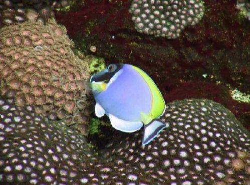 poissons le diaporama des plus beaux poissons