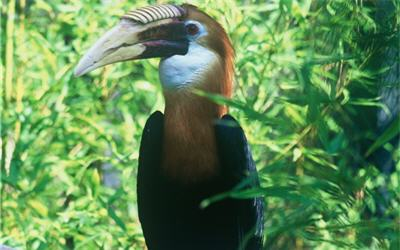 Les parcs oiseaux le jardin des oiseaux tropicaux - Jardin des oiseaux la londe ...