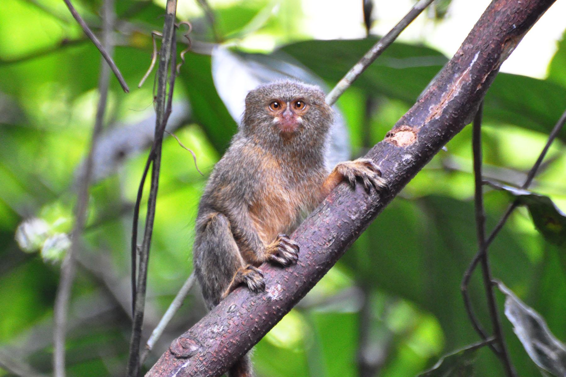 nom du petit singe bd